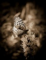Butterfly Vintage by Photolover68