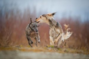 chasing by Wolfruede