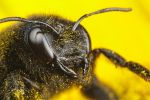 Black on Yellow #1 by dalantech