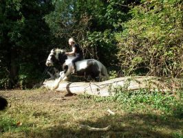 Jumping Gypsy Vanner Bareback And Bitless by StarCrossedPsycho