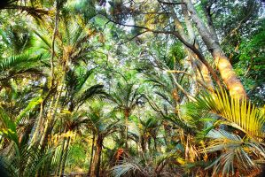 Tropical Paradise by sculpted1