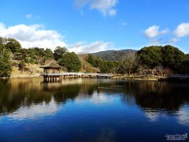 Peaceful feeling in Nara Park by Gallynette