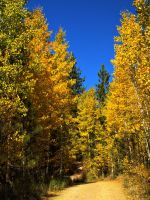 North Canyon Aspens by MartinGollery