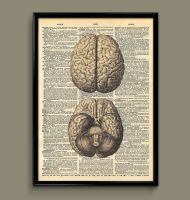 brain dictionary print by ColourInk