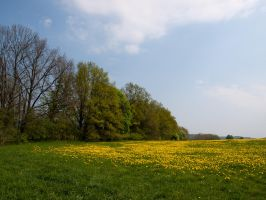yellow meadow by BSOD90