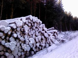 Logs in the dirt road in Eire by GoldenDani