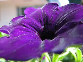 texture of a purple flower by Finnish-Viking