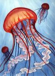 jellyfish by acasas