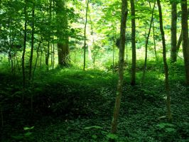 Forest Stock 05 by Solira-Stock