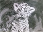 leopard baby by Ady26