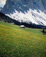 Beautiful flower meadow at high altitude by spinngewebe