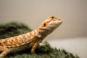 Contemplating Crickets by charlesheadphotos