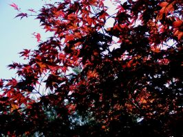 red tree by dozy-de