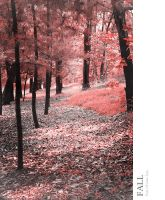 Fall by poetry2capullet