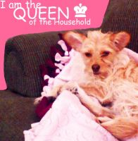I am the QUEEN of the House by samiikinns