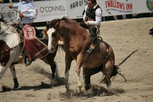 rodeo 43 by xbr0kendevotion