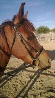 serenitys new bridle =D by Khainon