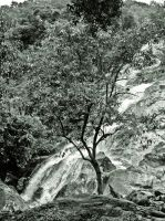 A Tree at Waterfall by SongYong