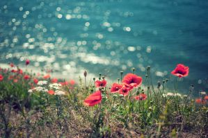 Poppies by Freggoboy