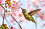 Blooms and Birds by Grouper