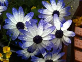 Purple and White flowers Butchart Gardens by TheWorldFellApart