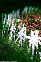 crosses for the abused by tarsh