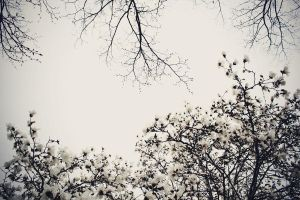 When Winter meets Spring by LevisPhotography