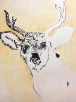 deer by Lydiapourmand