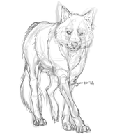 C : Wolf sketch by Symrea
