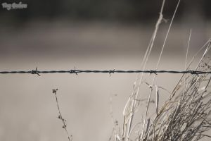 Barbed Wire 2 desat by droy333