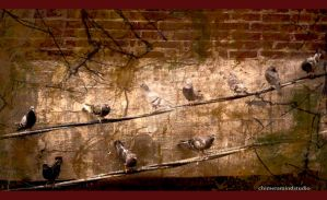 Jazz Pigeons on a Wire by chimeramindstudio