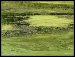 Green Algae by Mogrianne