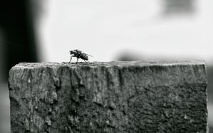 Weird insect at Bolton Abbey by Distorted-Colours