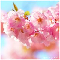 Sakura Love by CecilyAndreuArtwork
