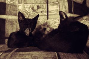 Yawn-Cat by westwo0d