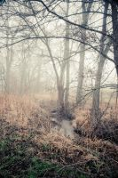 misty landscape 04 by t3hr