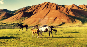 Paints Under Painted Hills by ChishioOchita