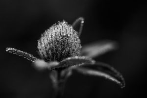 Morning Dew by sarahbuhr