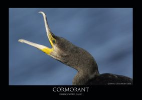 Cormorant by THEDOC4