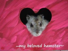 my hamster by ravenkhaw