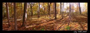 Ontario Woodland Pano by jasonwilde