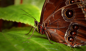 Butterfly hatching - Troja 1. by Angi-Shy