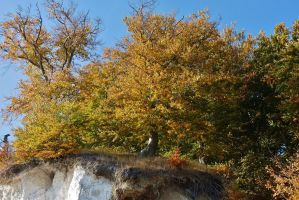 autumnal tree on a chalk rock by Dieffi