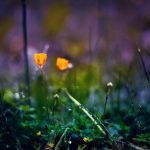 HARMONY - complementary by onewordphoto