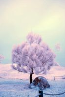Infrared photography - Tree by nakita