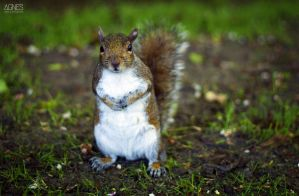Squirrel by AgnesBPhoto