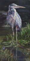 Great Blue Heron by Earleywine