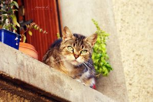 the cat next door. by kamilla-b