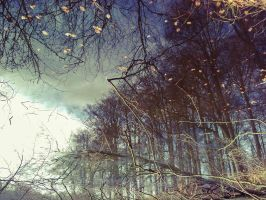 Mirror forest by siby