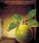 Magrittes Apple by ShaneGallagher